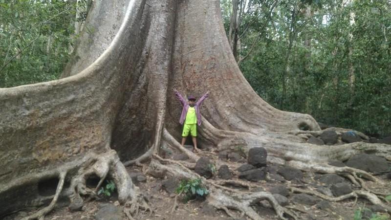 Vào rừng Nam Cát Tiên ngắm cây gõ bác Đồng 700 năm tuổi - ảnh 8