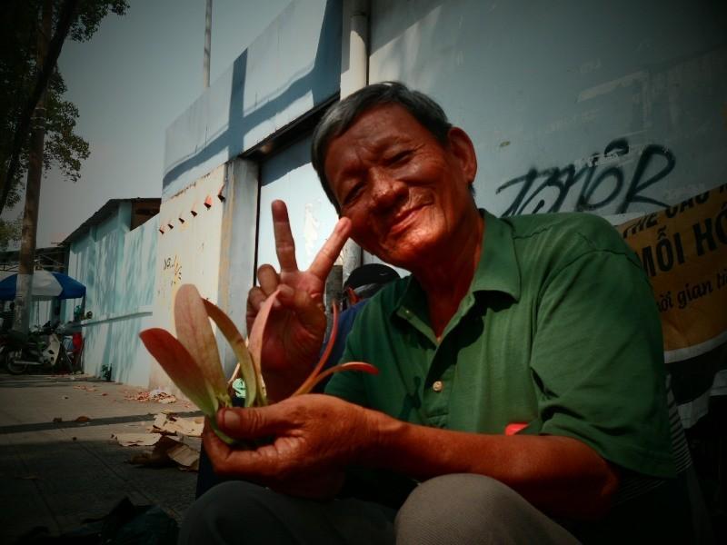 Sài Gòn lãng mạn mùa trái dầu bay - ảnh 2