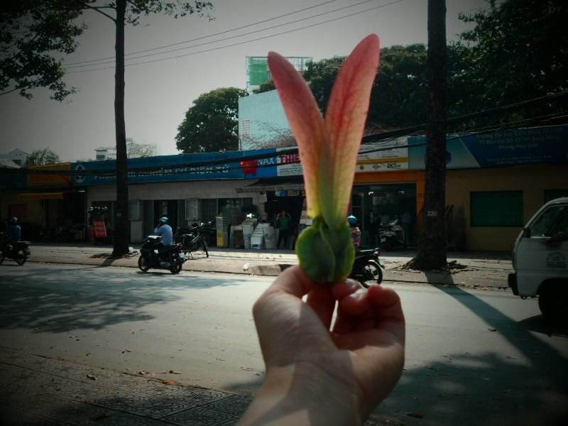 Sài Gòn lãng mạn mùa trái dầu bay - ảnh 8