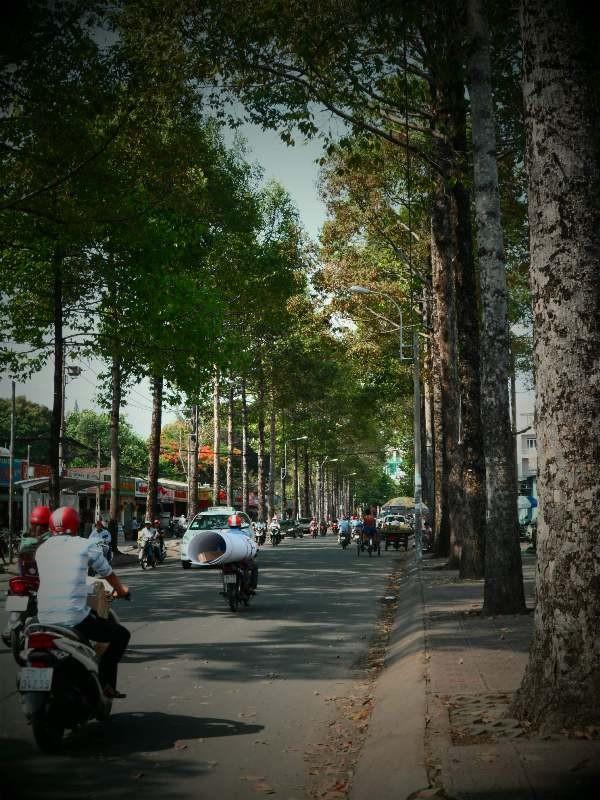 Sài Gòn lãng mạn mùa trái dầu bay - ảnh 6