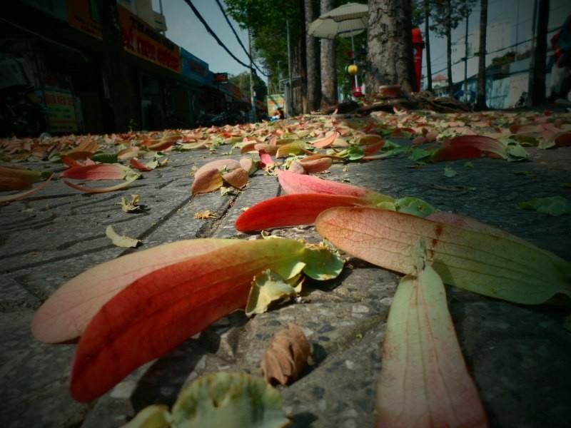 Sài Gòn lãng mạn mùa trái dầu bay - ảnh 7