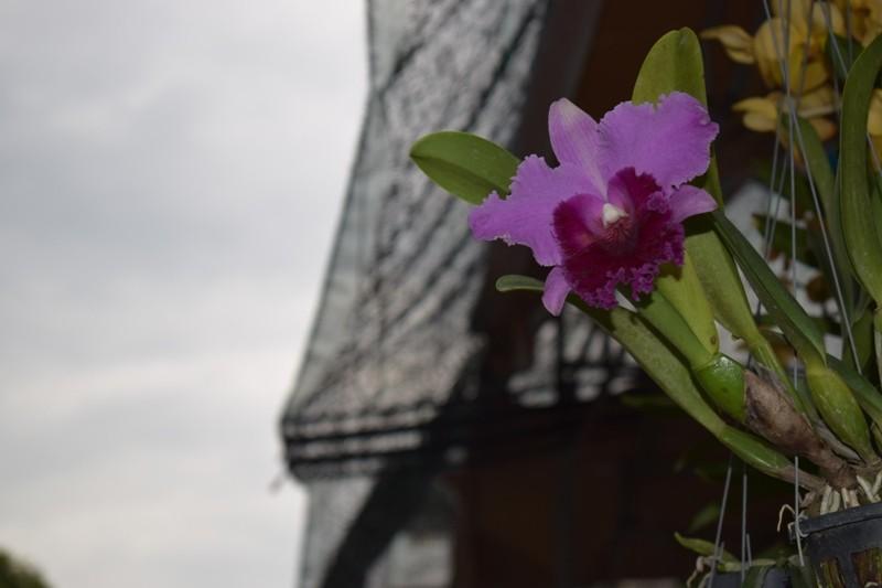 Bến Bình Đông: Hoa tươi, người héo - ảnh 17