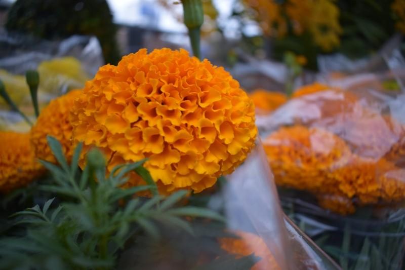 Bến Bình Đông: Hoa tươi, người héo - ảnh 6