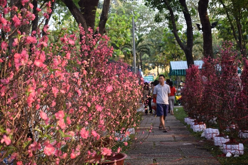 Người Sài Gòn ngẩn ngơ ngắm hoa đào đất Bắc - ảnh 8