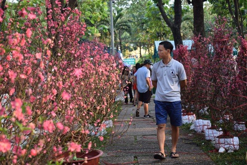 Người Sài Gòn ngẩn ngơ ngắm hoa đào đất Bắc - ảnh 2