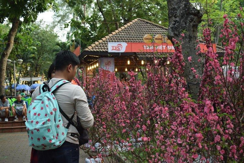 Người Sài Gòn ngẩn ngơ ngắm hoa đào đất Bắc - ảnh 7