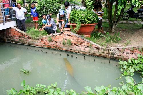 Nuôi 'thủy quái' trong vườn nhà - ảnh 1