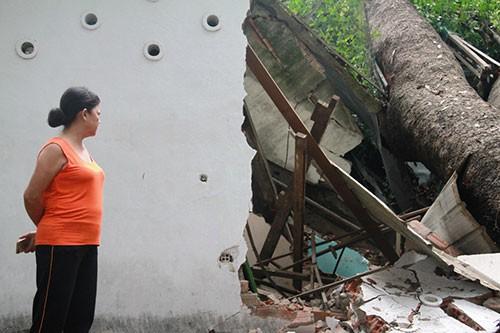 Cây cổ thụ đè sập hai phòng của Cung văn hóa Lao Động - ảnh 1