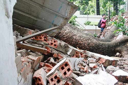Cây cổ thụ đè sập hai phòng của Cung văn hóa Lao Động - ảnh 6