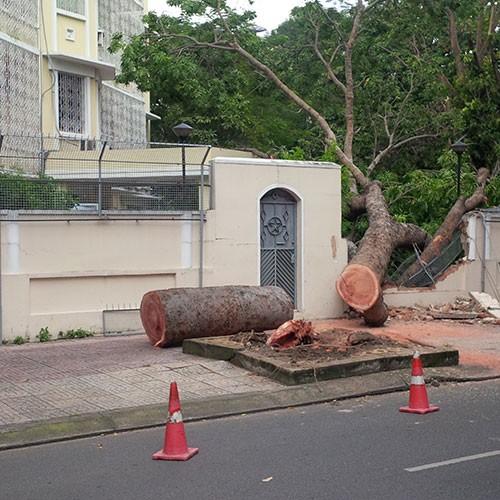 Cây cổ thụ đổ sập vào hàng rào trụ sở Lãnh sự quán Nga - ảnh 1