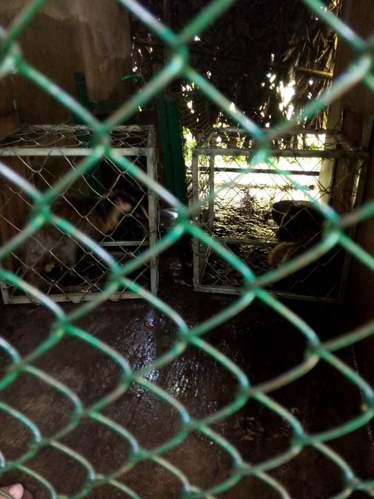 Giải cứu bảy cá thể cầy quý hiếm nằm trong danh sách đỏ - ảnh 1