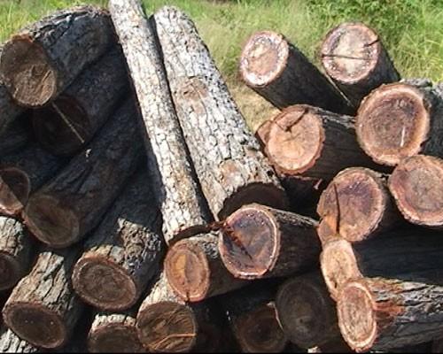 Phát hiện hơn 20 mét khối gỗ lậu tập kết bên quốc lộ 14 - ảnh 1