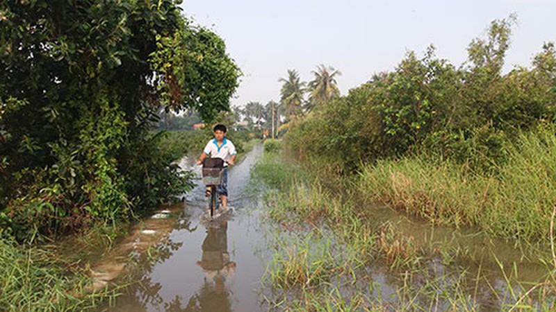 Vườn mai, ao cá ngập nặng sau mưa - ảnh 8