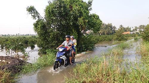 Vườn mai, ao cá ngập nặng sau mưa - ảnh 9