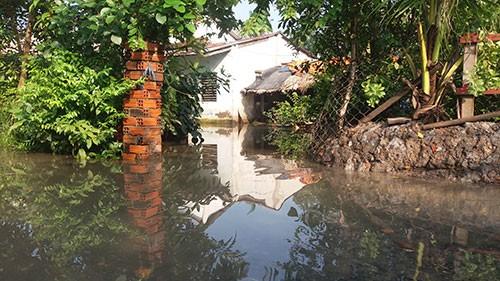 Vườn mai, ao cá ngập nặng sau mưa - ảnh 10