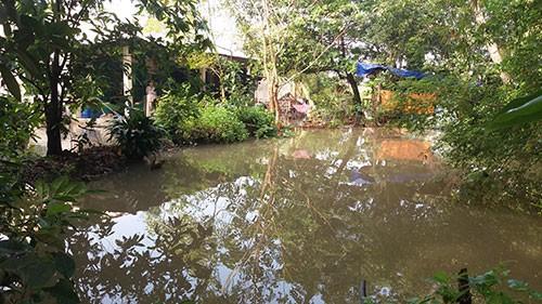 Vườn mai, ao cá ngập nặng sau mưa - ảnh 2