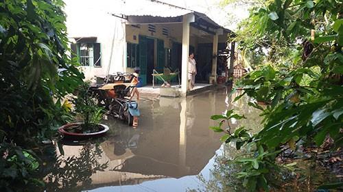Vườn mai, ao cá ngập nặng sau mưa - ảnh 3