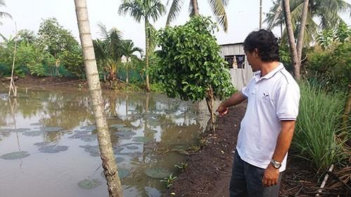 Vườn mai, ao cá ngập nặng sau mưa - ảnh 5