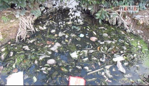 Sẽ di dời trại heo gây ô nhiễm ở huyện Bình Chánh - ảnh 4