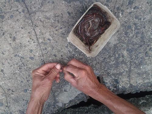 Độc đáo nghề câu cá trê ngay giữa đường phố - ảnh 2