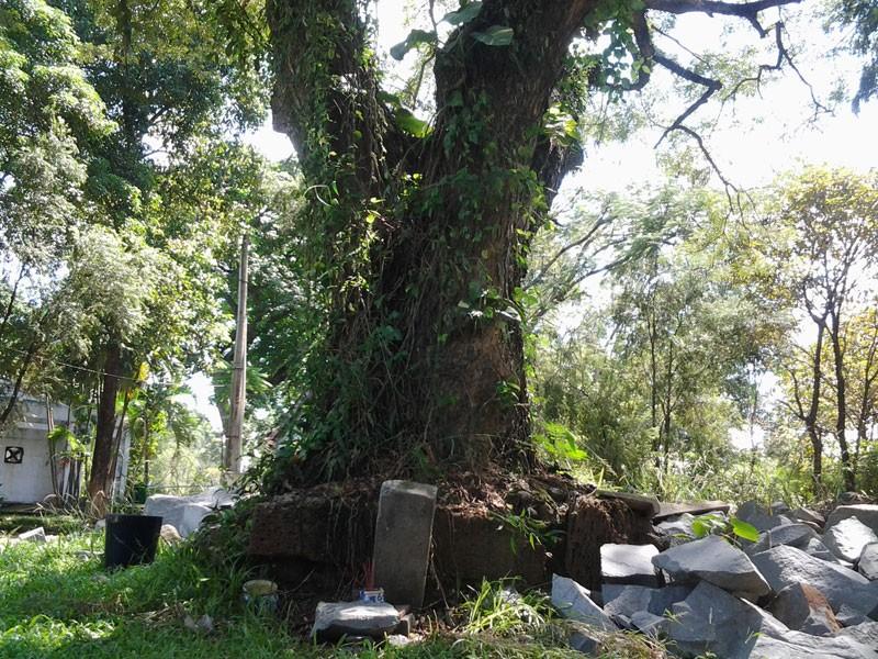 Bí ẩn những ngôi mộ kỳ lạ trên núi Bửu Long - ảnh 5