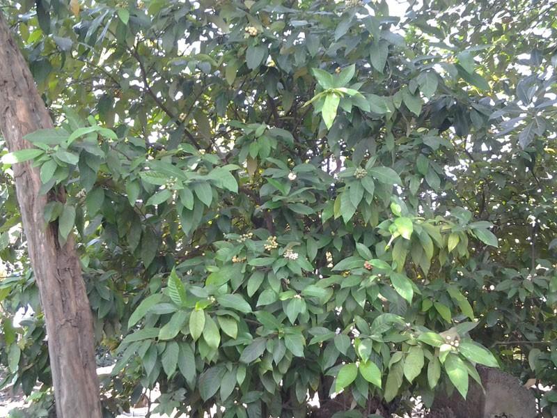 Chuyện thú vị trái cây rừng vua Gia Long từng ăn lót lòng, đỡ đói - ảnh 3