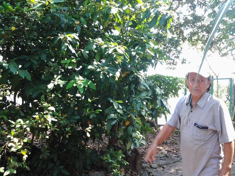 Chuyện thú vị trái cây rừng vua Gia Long từng ăn lót lòng, đỡ đói - ảnh 4