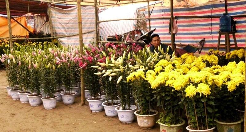 Đến chợ hoa xót xa cho người trồng hoa... - ảnh 4