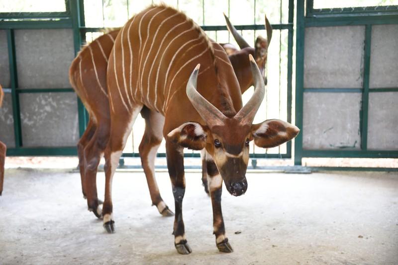 Vinpearl Safari bác thông tin 700 loài thú quý hiếm bị giết - ảnh 1