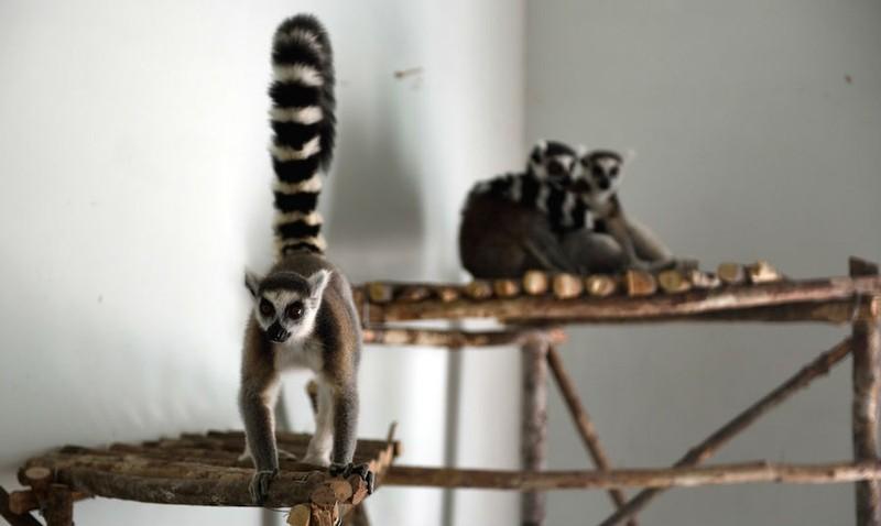 Vinpearl Safari bác thông tin 700 loài thú quý hiếm bị giết - ảnh 2