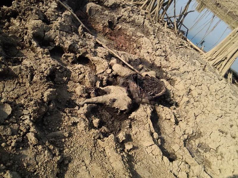 Phát hiện xác voi con đang phân hủy bên đầm lầy - ảnh 1