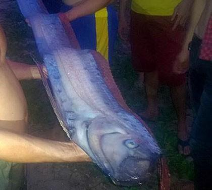 Cá hố khổng lồ dạt vào bờ biển Phan Thiết - ảnh 1