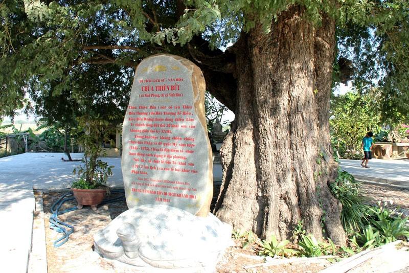 Một làng có 3 cụ cây gần 300 năm tuổi - ảnh 5