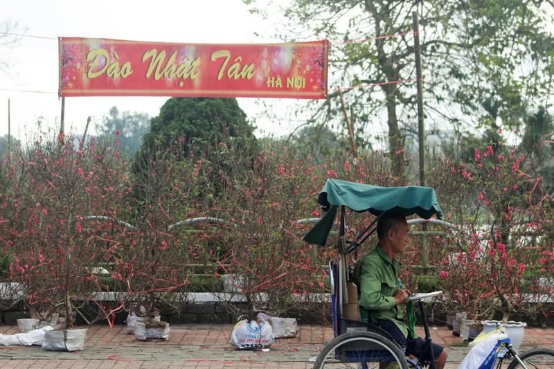 Cây mai tiền tỉ tại chợ hoa xuân ở Huế - ảnh 5