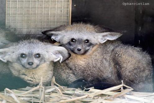 Sắp mở cửa vườn thú lớn nhất Việt Nam  - ảnh 1