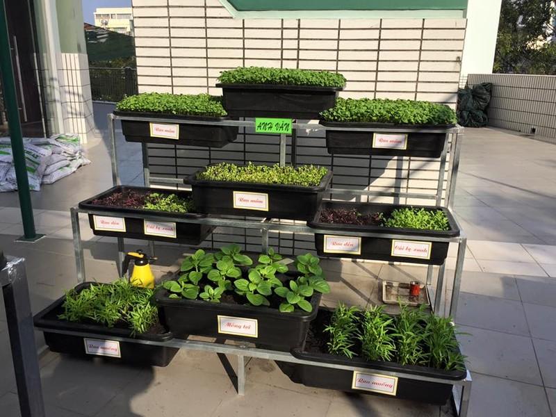 Thêm một trường học làm vườn rau sạch cho học sinh  - ảnh 4