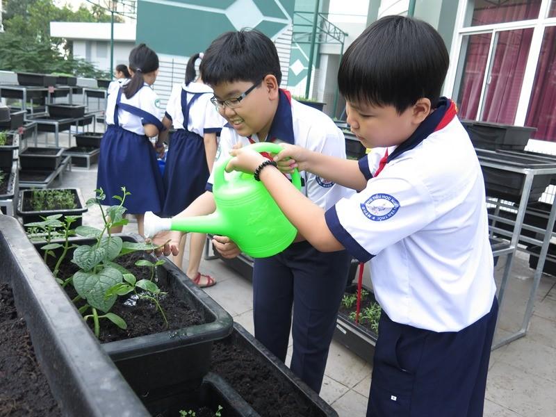 Thêm một trường học làm vườn rau sạch cho học sinh  - ảnh 6