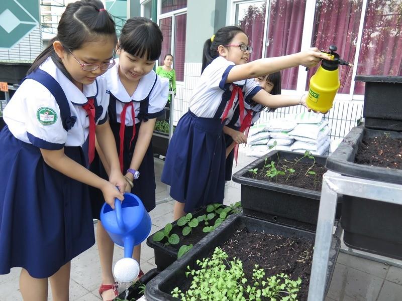 Thêm một trường học làm vườn rau sạch cho học sinh  - ảnh 7