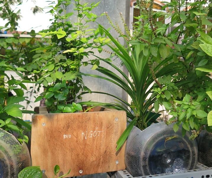 Lạ mắt vườn cây từ vật dụng tái chế của học sinh lớp 8  - ảnh 13