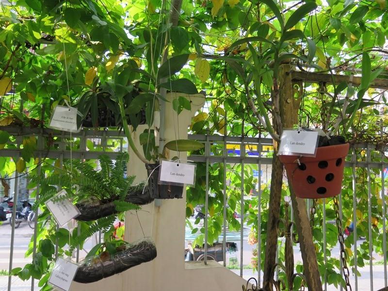 Lạ mắt vườn cây từ vật dụng tái chế của học sinh lớp 8  - ảnh 9