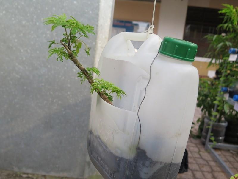 Lạ mắt vườn cây từ vật dụng tái chế của học sinh lớp 8  - ảnh 11