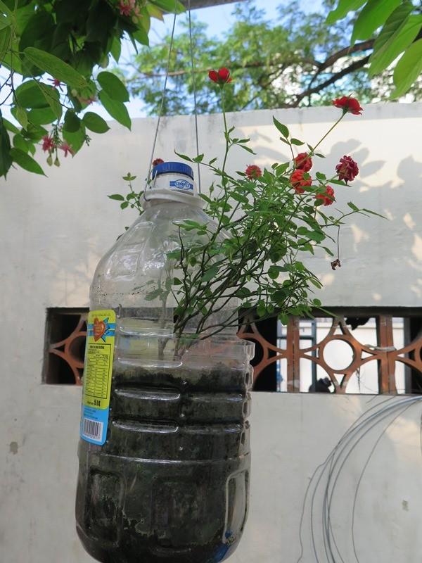 Lạ mắt vườn cây từ vật dụng tái chế của học sinh lớp 8  - ảnh 12