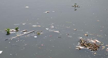 Kênh Nhiêu Lộc – Thị Nghè đầy rác bốc mùi, cá chết hàng loạt - ảnh 2