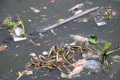 Kênh Nhiêu Lộc – Thị Nghè đầy rác bốc mùi, cá chết hàng loạt - ảnh 3