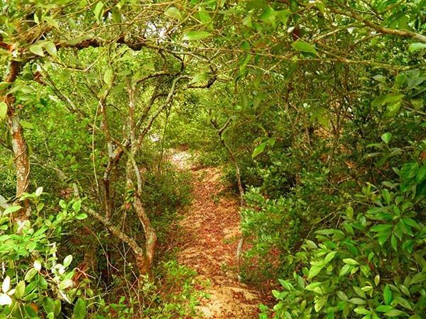 Khu rừng trâm bầu cổ che làng khỏi cát bay  - ảnh 10