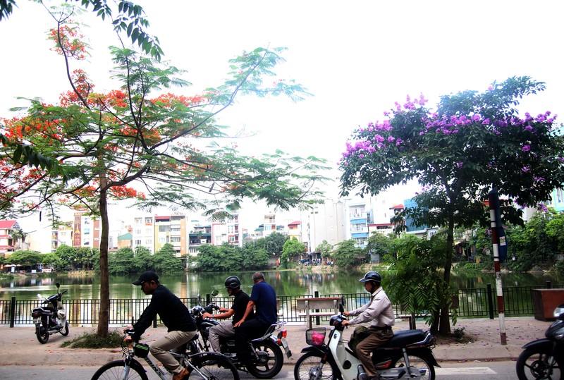 Sắc tím Bằng lăng dịu dàng giữa Hà Nội, phố Huế - ảnh 4