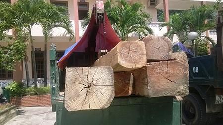 Cảnh cáo, xử phạt 45 triệu Hạt trưởng kiểm lâm mua gỗ lậu - ảnh 1