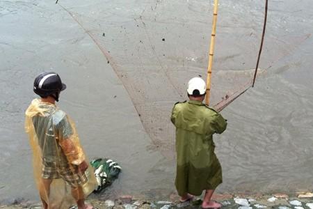 Người Hà Nội 'nô nức' ra sông bắt cá sau cơn mưa lớn  - ảnh 10