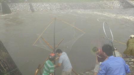 Người Hà Nội 'nô nức' ra sông bắt cá sau cơn mưa lớn  - ảnh 6