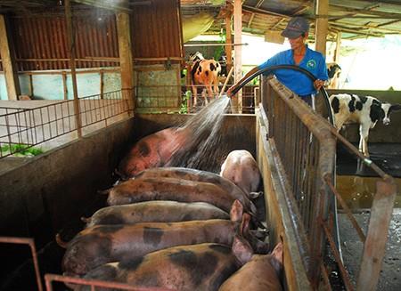 """Đưa tiến bộ công nghệ vào nông nghiệp để """"đọ sức"""" TPP - ảnh 1"""